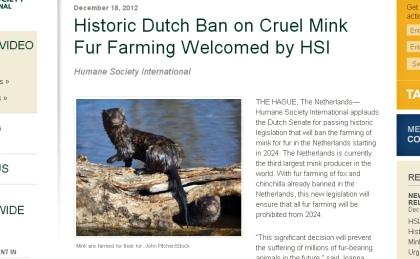 Holanda dice adios a las granjas de visón_r