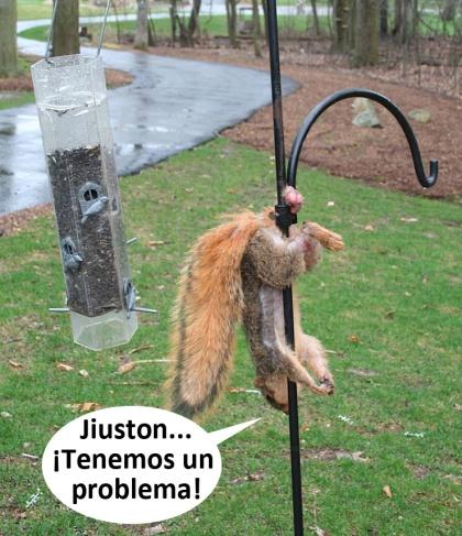 Jiuston
